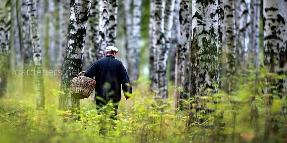 Если заблудился в лесу