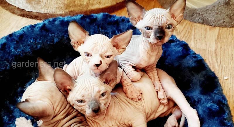 Выбираем породу кота для аллергиков