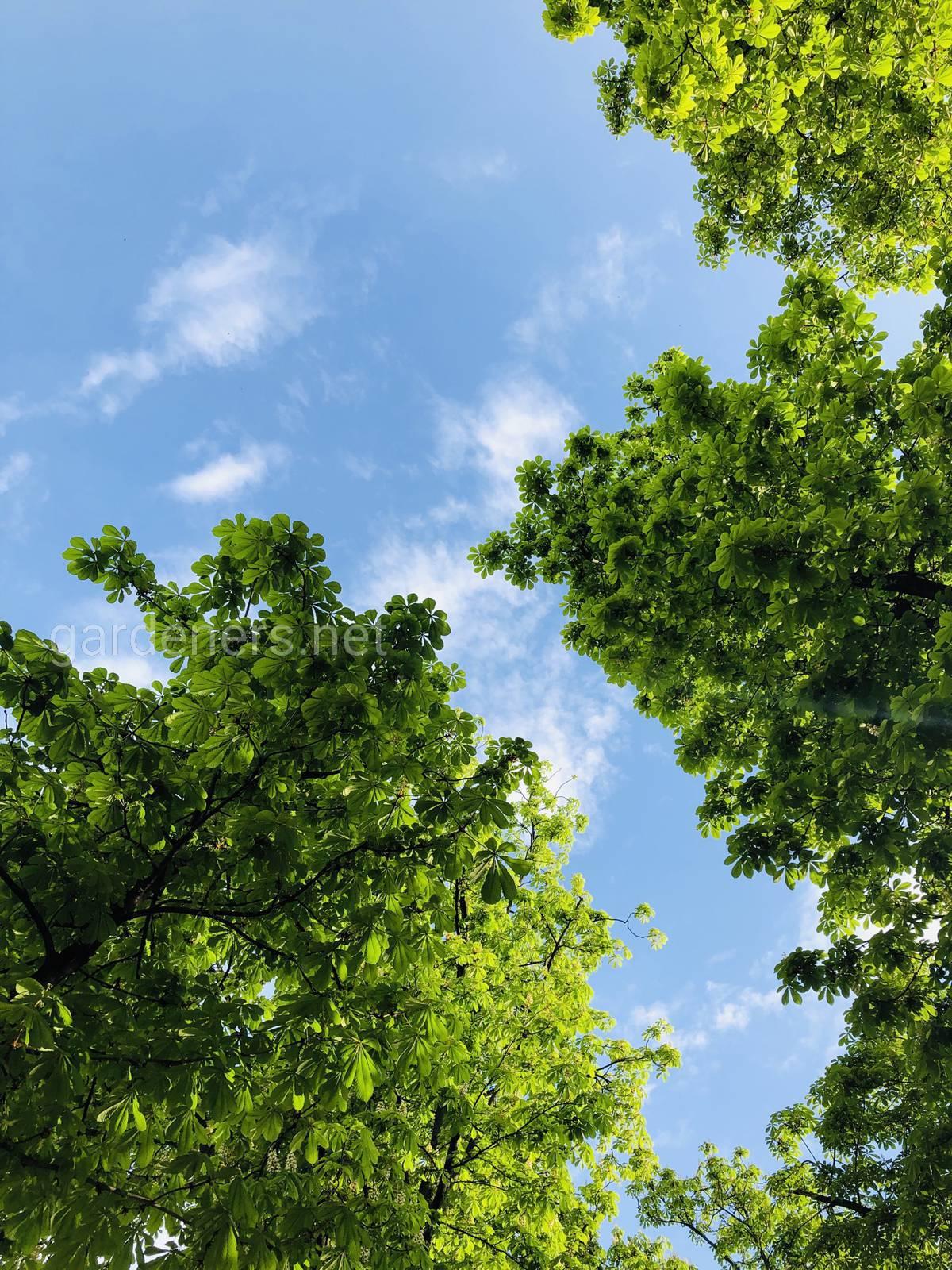 Небо над Киевом. Парк им Тараса Шевченко, Киев