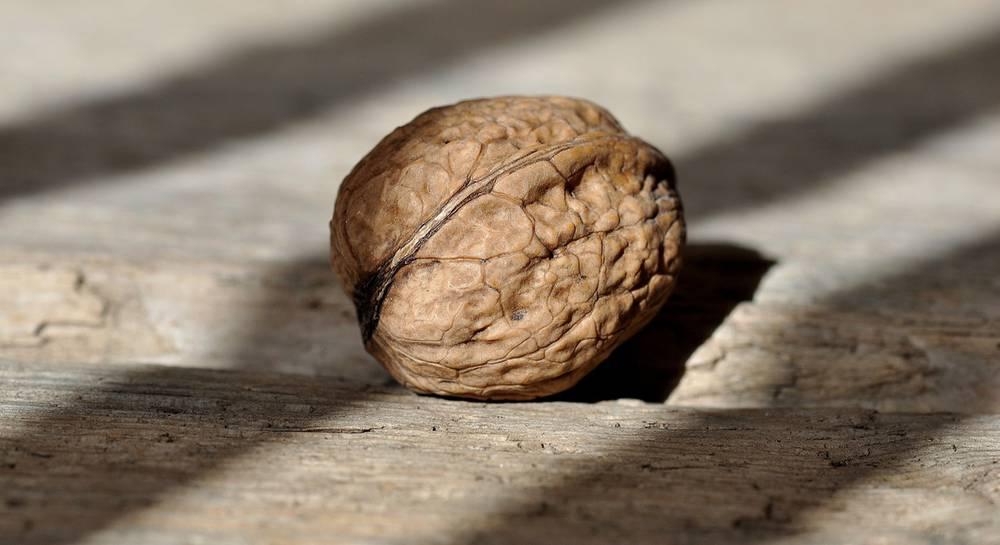грецкий орех.jpg