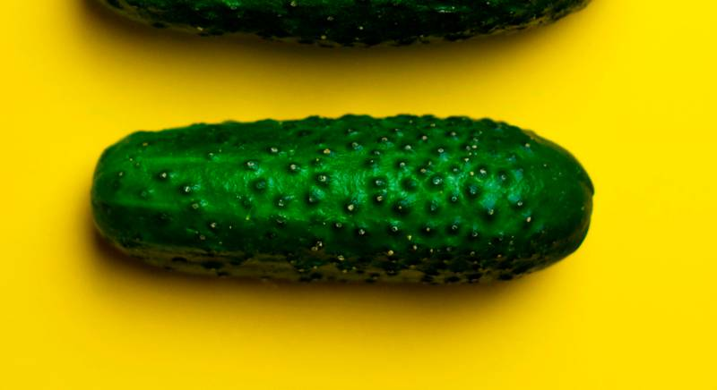 Новые сорта огурцов без горечи. Секреты выращивания