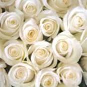 цветы ЮДЕНА Брест
