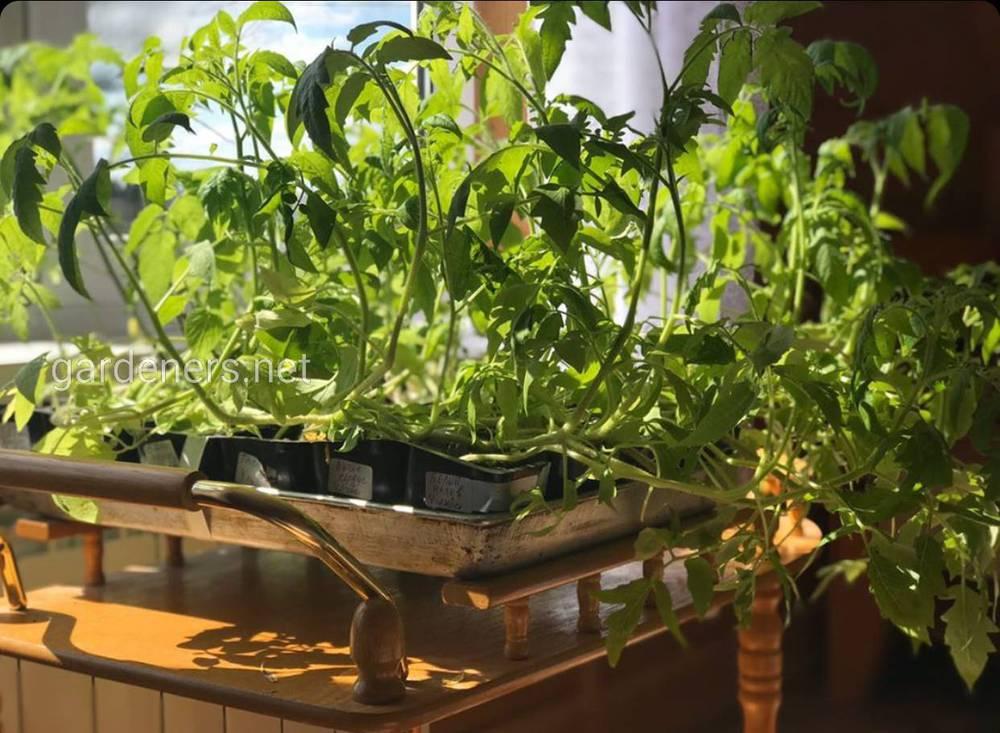 В теплице выращиваем помидоры и огурцы, болгарский перец