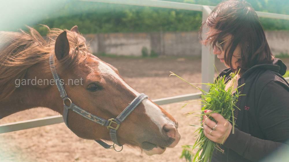 Как правильно ухаживать за лошадьми
