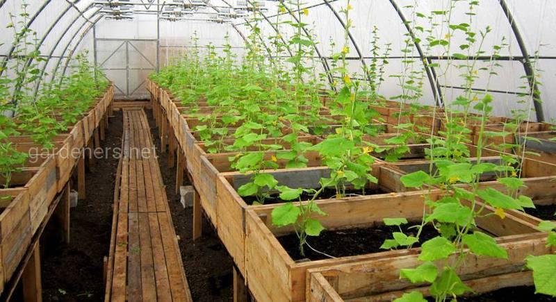 Правила размещения разных растений в одной теплице