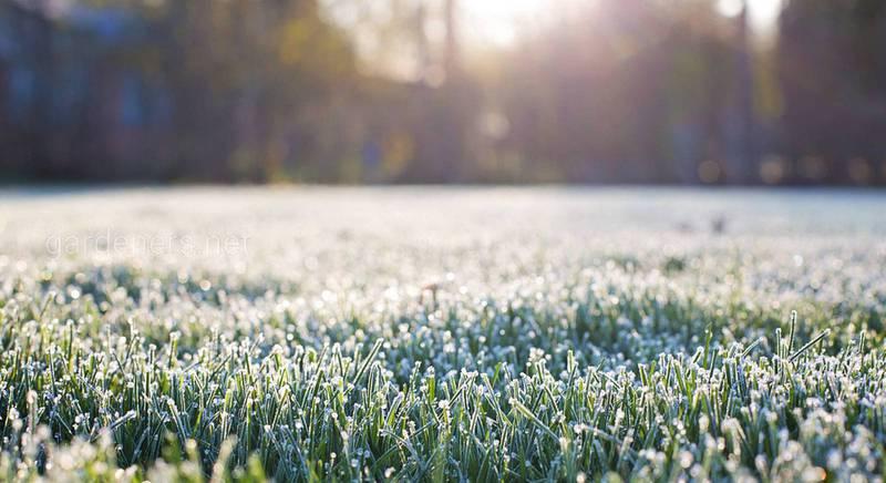 Чтоб участок не замерз: что делать дачнику после первых заморозков