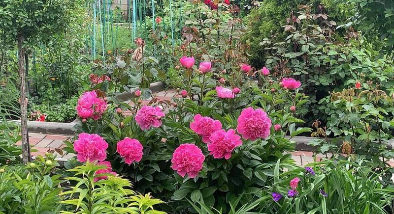 Палітра квітників садової ділянки