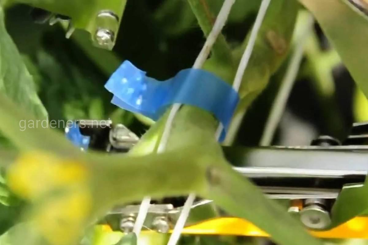Преимущества подвязки растений