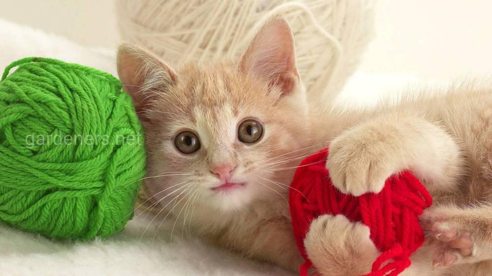 Игрушки для котенка из ниток