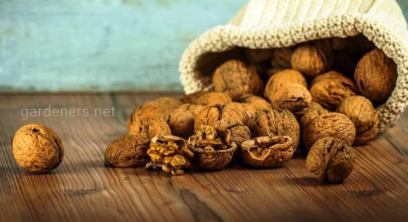 Вкусно и полезно: 4 лучших рецепта на основе грецкого ореха