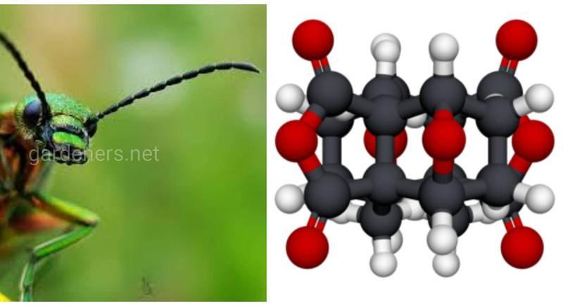 Декілька фактів про кантаридин - секрет шпанських мушок, які здавна застосовуються в якості афродизіаку