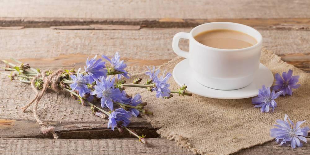 Чай из корня цикория