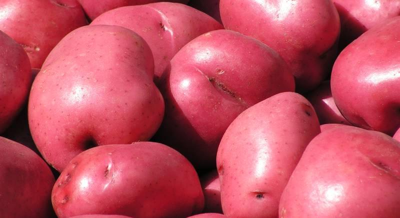 красный картофель.jpg