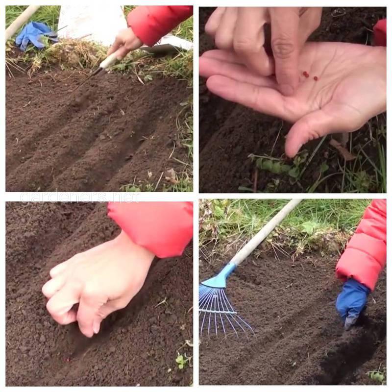 Как посеять семена полосками?