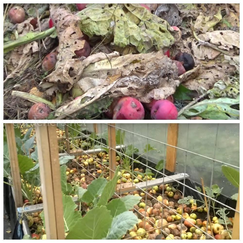 Какую падалицу применяют в компосте