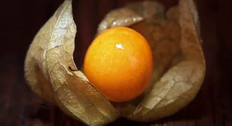 Физалис: выбираем сорта для выращивания
