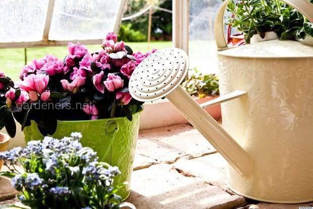 Как позаботиться о комнатных растениях во время не продолжительного отпуска?