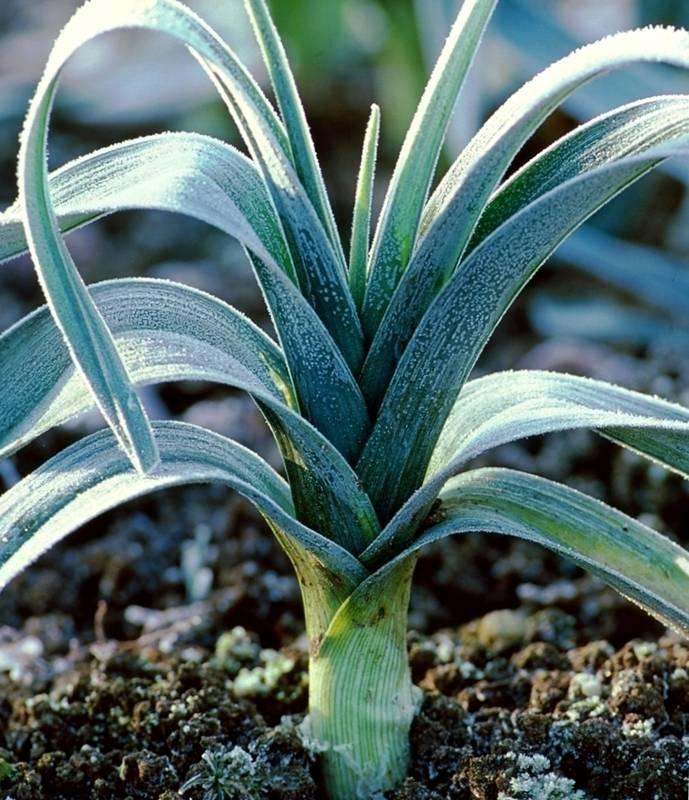 Як поліпшити зовнішній вигляд та захистити рослини від шкідників за допомогою папіру?
