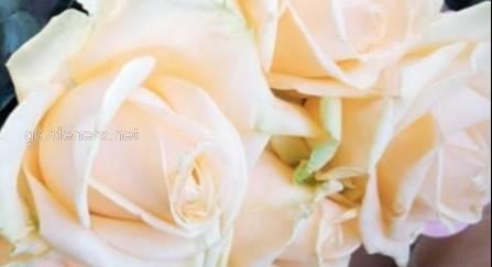 Виды и сорта роз