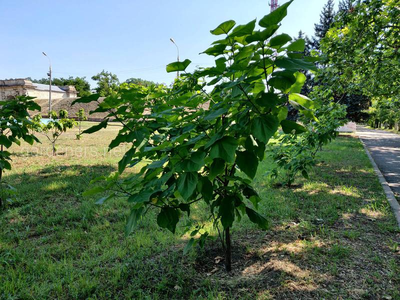 Як обрати та посадити декоративні кущі та дерева у вашому садку?