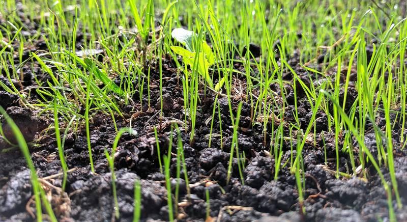 кислотность почвы.jpg