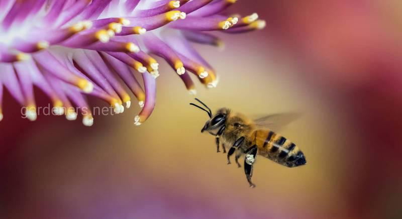 Летная работа пчел