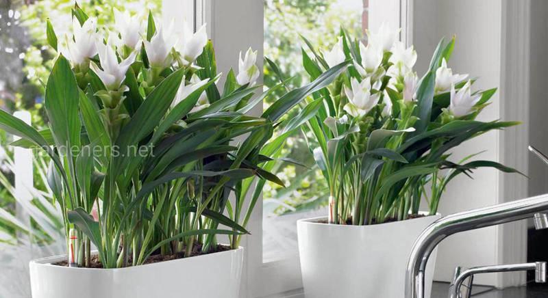 Зелений оазис у домі: вісім ідей, завдяки яким рослини стають дивовижною прикрасою