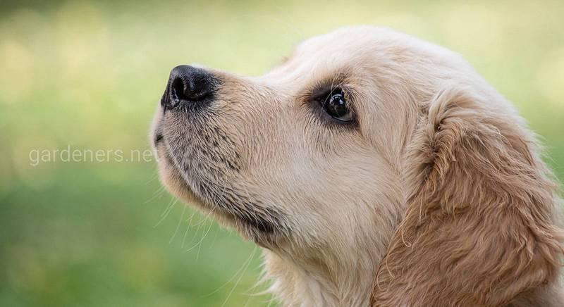 Перша допомога собаці
