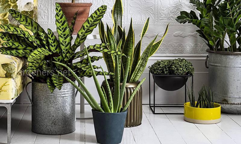 Сім правил у догляді за кімнатними рослинами