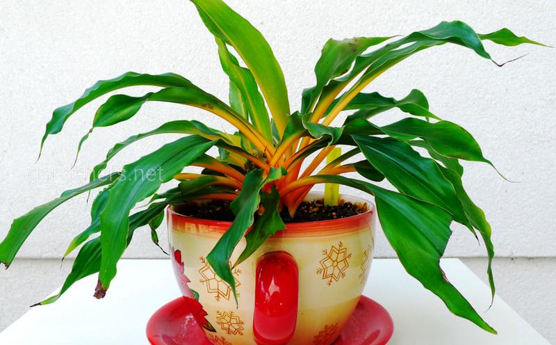 Какие комнатные растения будут хорошо себя чувствовать на балконе летом