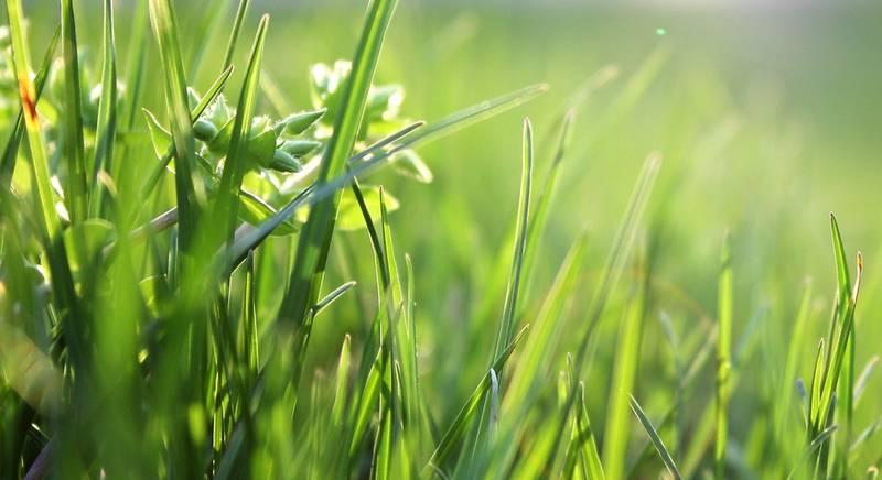 газон.jpeg