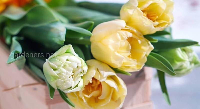 Прості поради, щоб букет квітів простояв довше