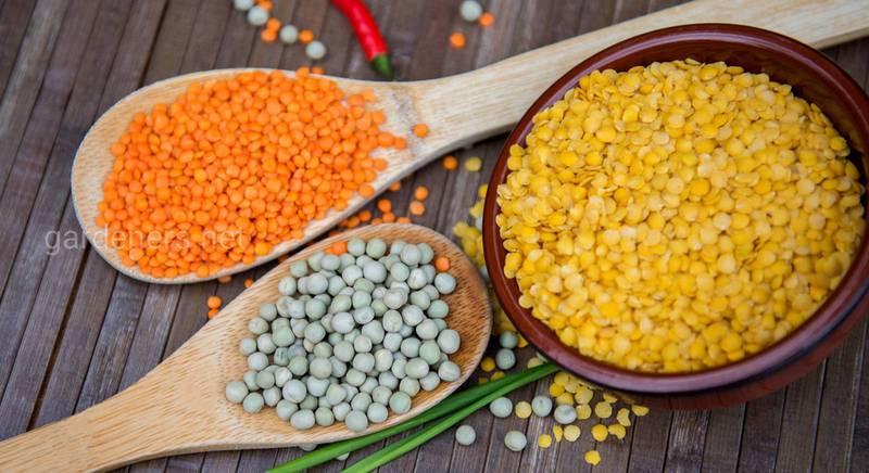 Рецепти страв з сочевиці: просто, корисно та смачно