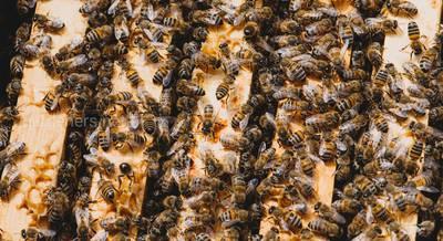 Пчелиная семья.jpg