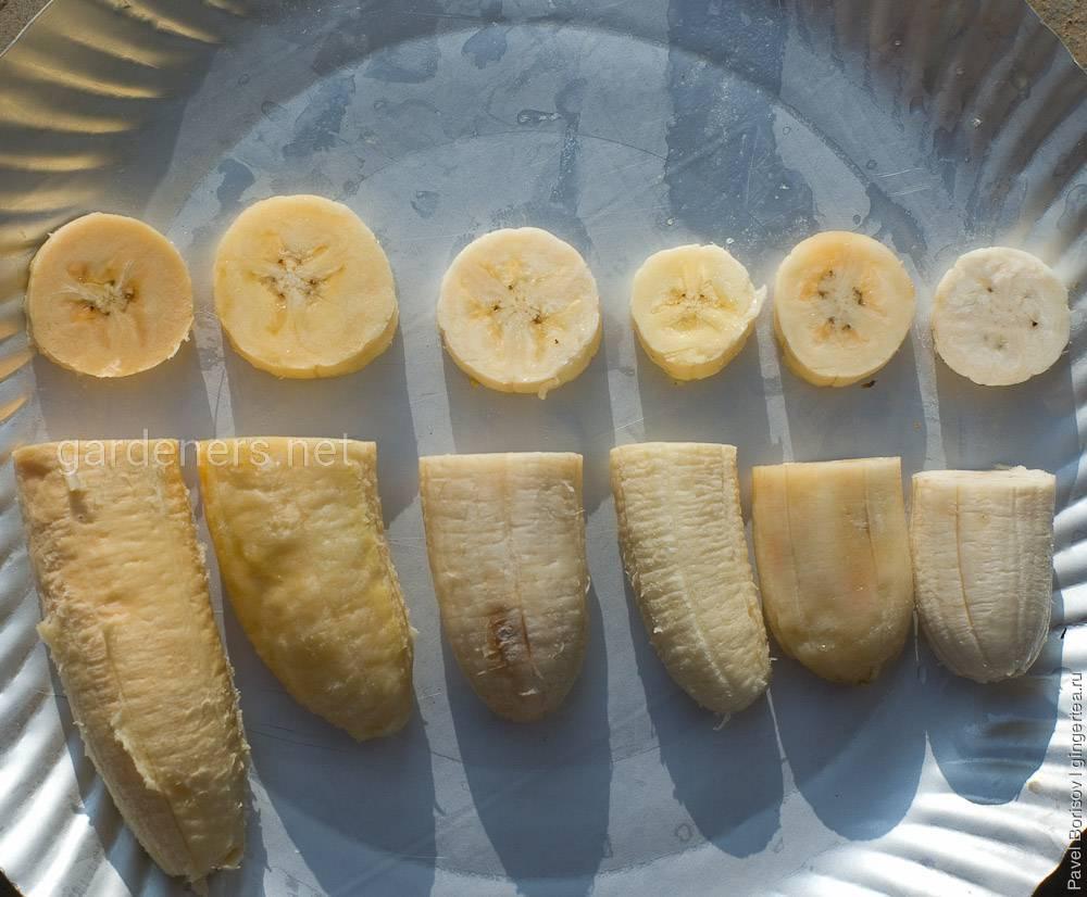 Виды бананов