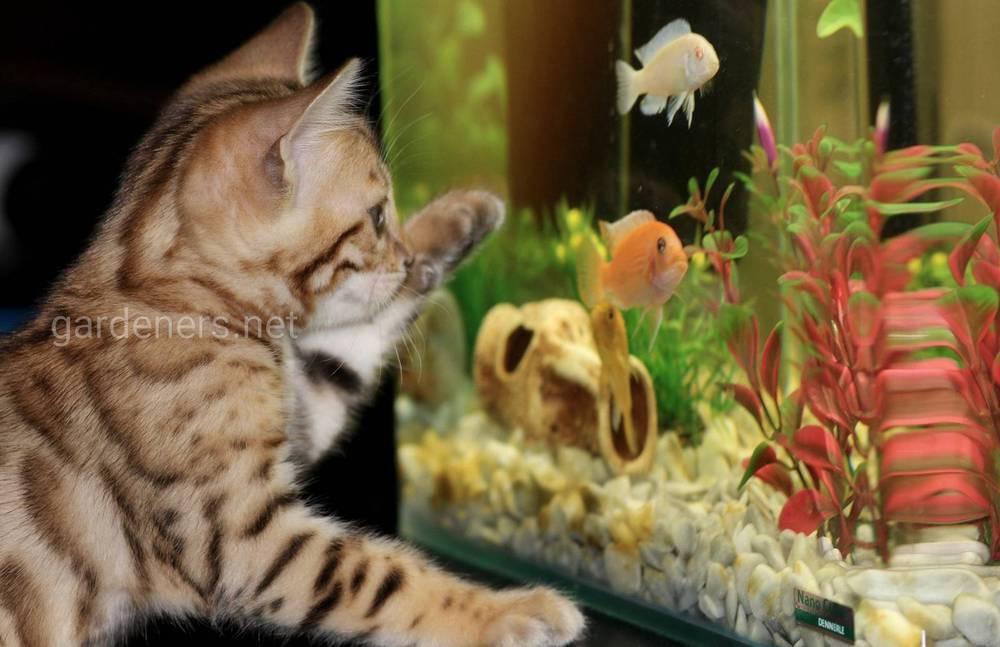 Контроль за рыбками