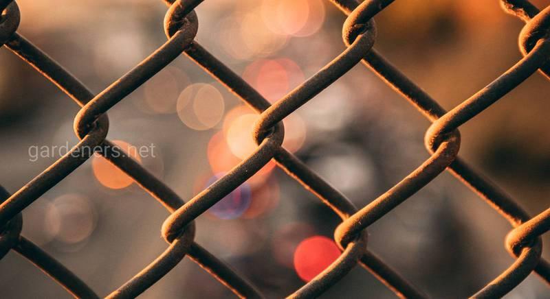 Як пофарбувати іржавий паркан