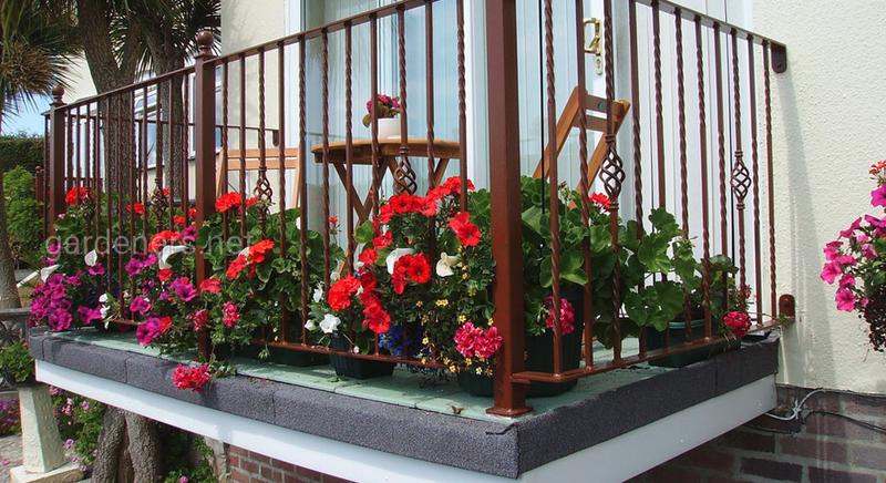 12 балконных цветов, которые любят солнце