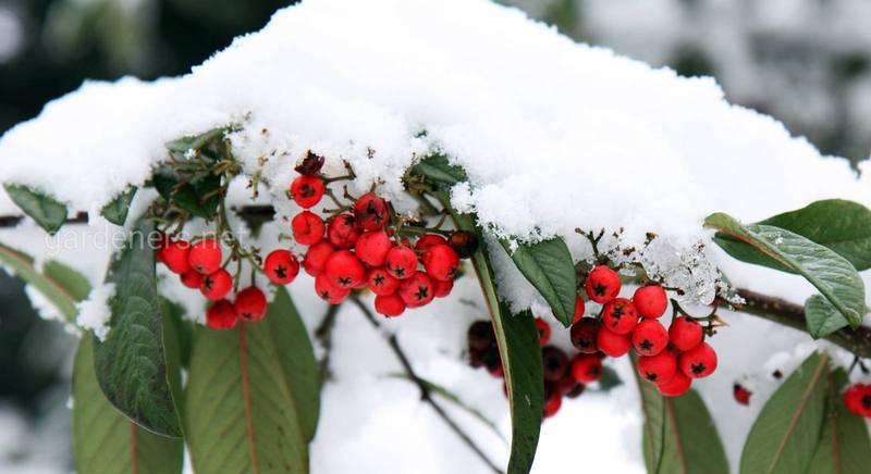ТОП-7 ошибок при подготовке сада к зиме