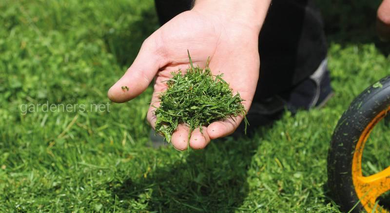 Мульчирование скошенной травой: правила, нюансы, советы
