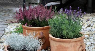 мой сад.jpg