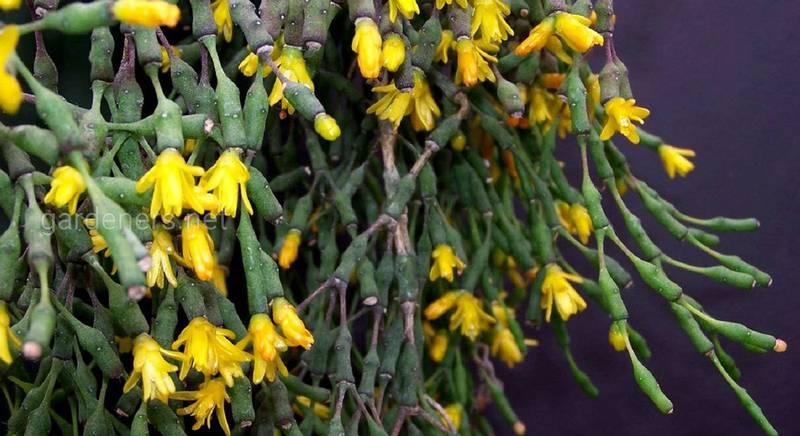 Кращі види кактусів без колючок