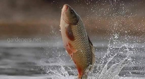 Вебінар для суб'єктів аквакультури: «Якість води для вирощування риби: забаганка чи необхідність?»