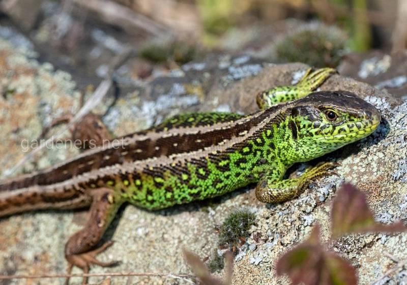 12 цікавих фактів про рептилій