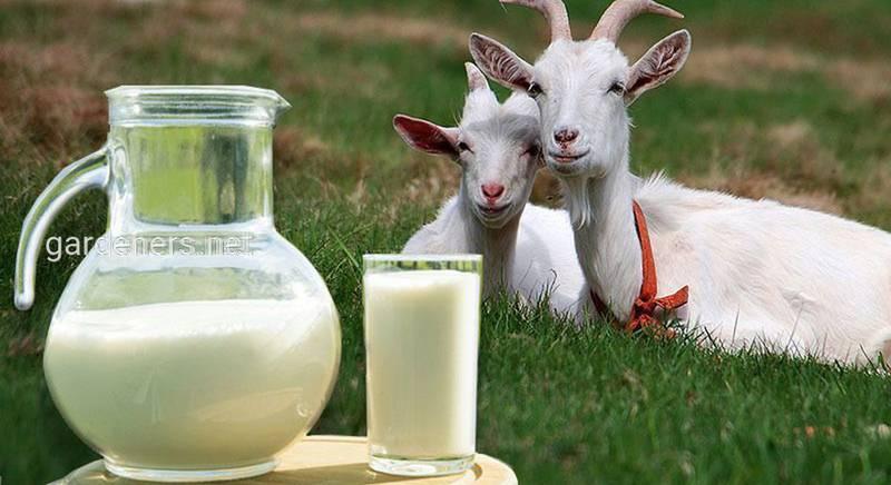 Молоко козье, 1 л