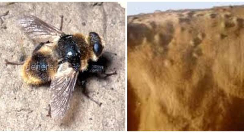 Захворювання людини та тварин, спричинені паразитуванням бичачого овода - гіподерматоз