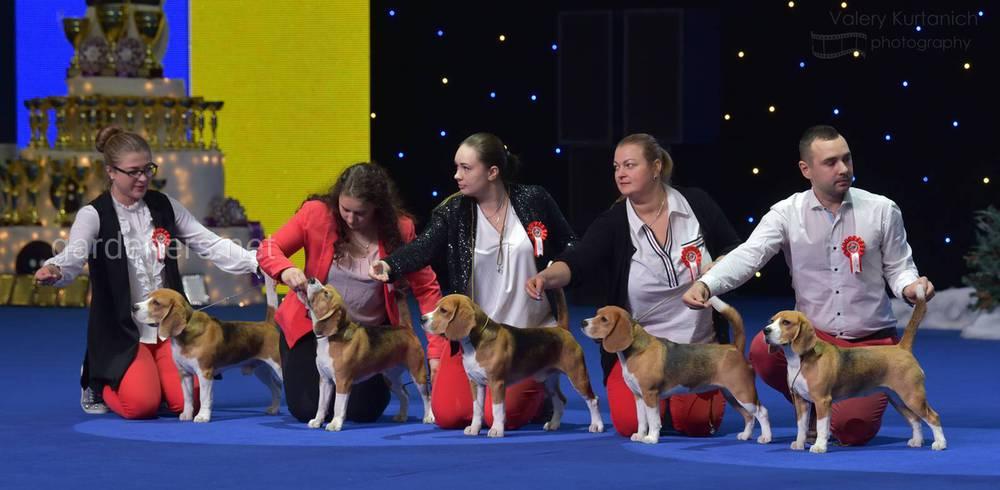 Міжнародні виставки собак усіх порід «Київська Русь»,
