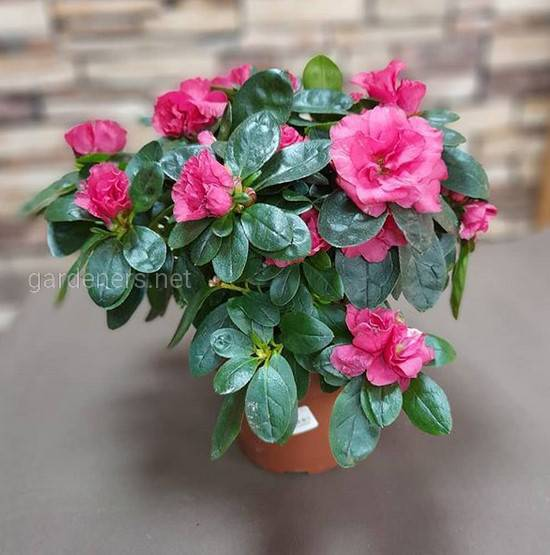 Как успешно выращивать растения, которые цветут зимой?