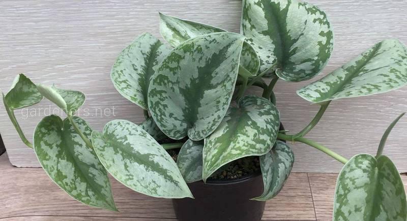 Безсолнечная диета: топ-15 комнатных растений, которые растут в тени