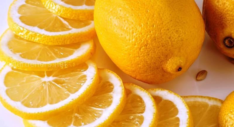 лимон в хозяйстве.jpg
